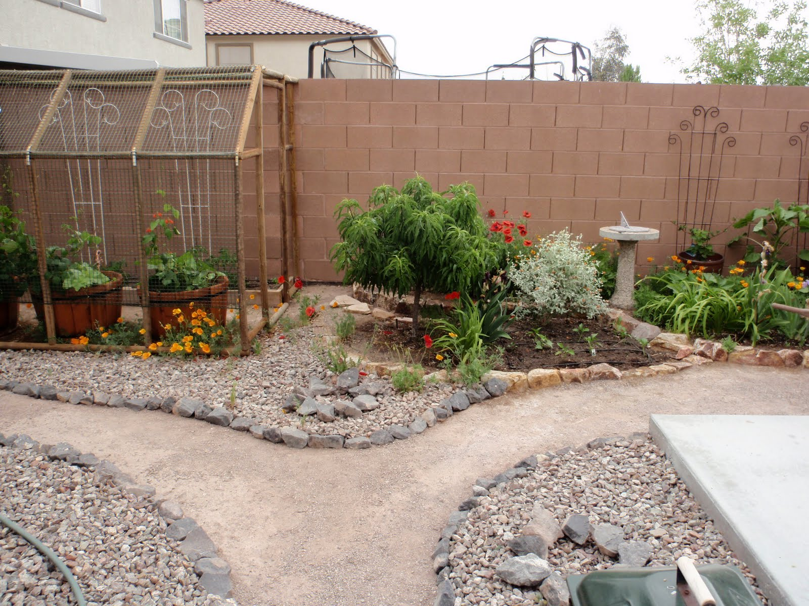 Gardens in Desert: May 2011
