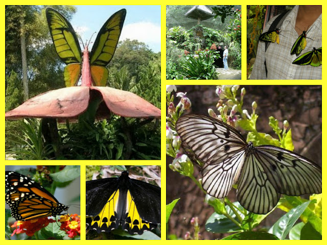 Bali Butterflies park and garden for your things to do in Bali