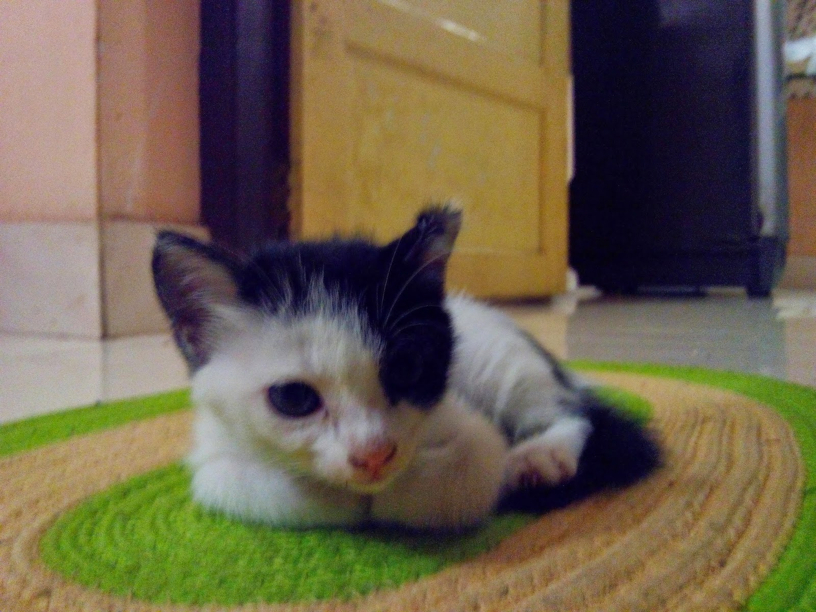 cute kitten photo, my pet