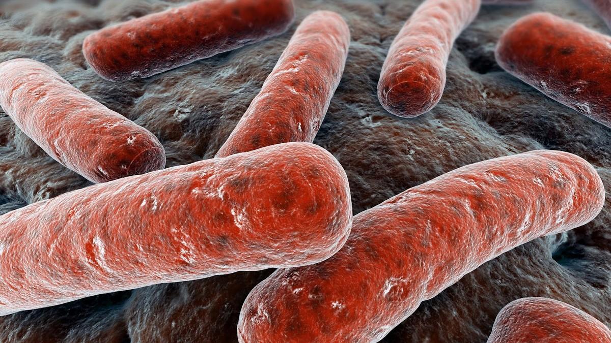 Encuentran Bacteria Resistente A Los Antibióticos Críticos