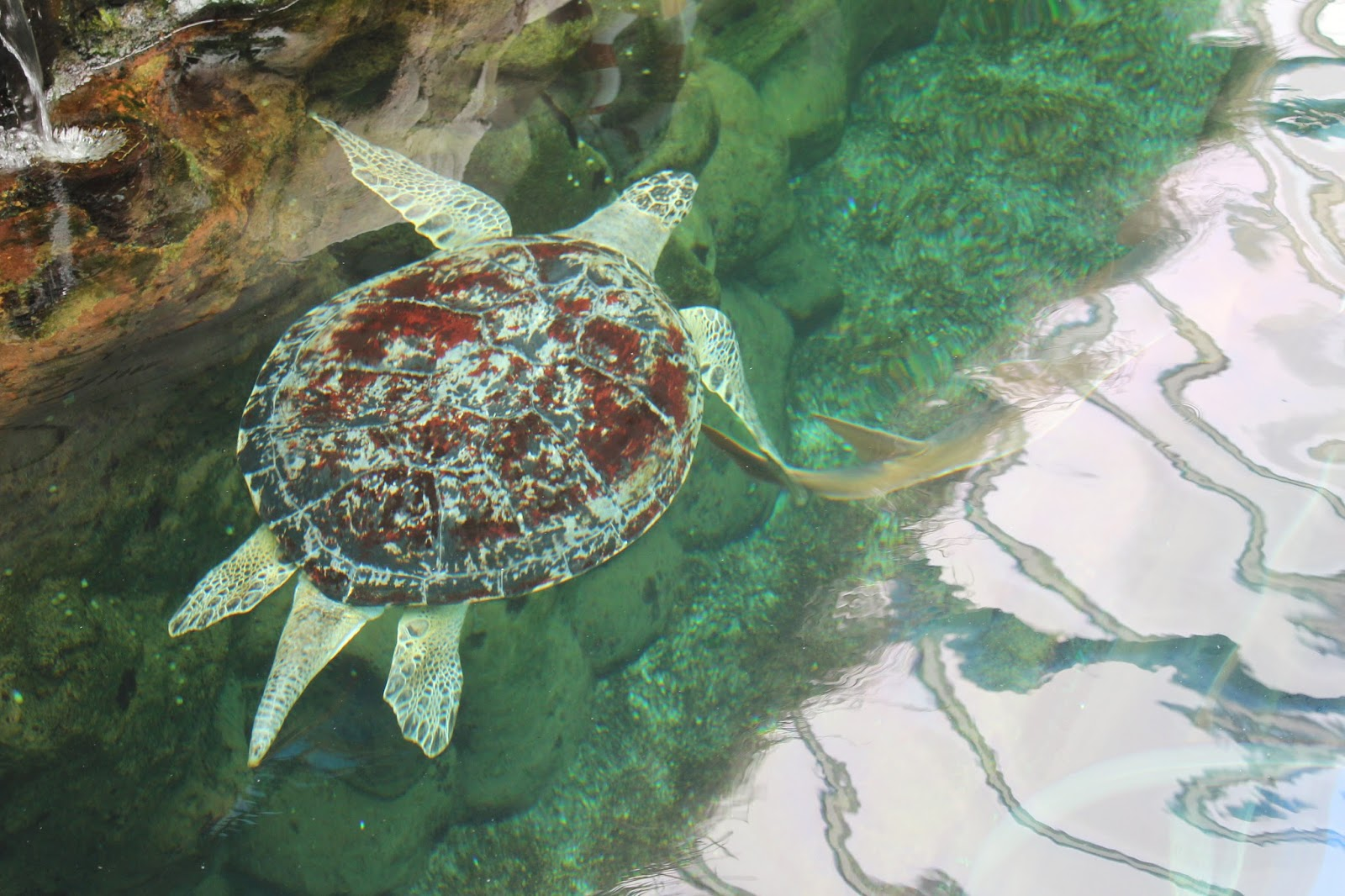 georgina-minter-brown-georgie-frequencies-holiday-bournemouth-birthday-trip-sea-coast-ocean-oceanarium-aquarium-turtle