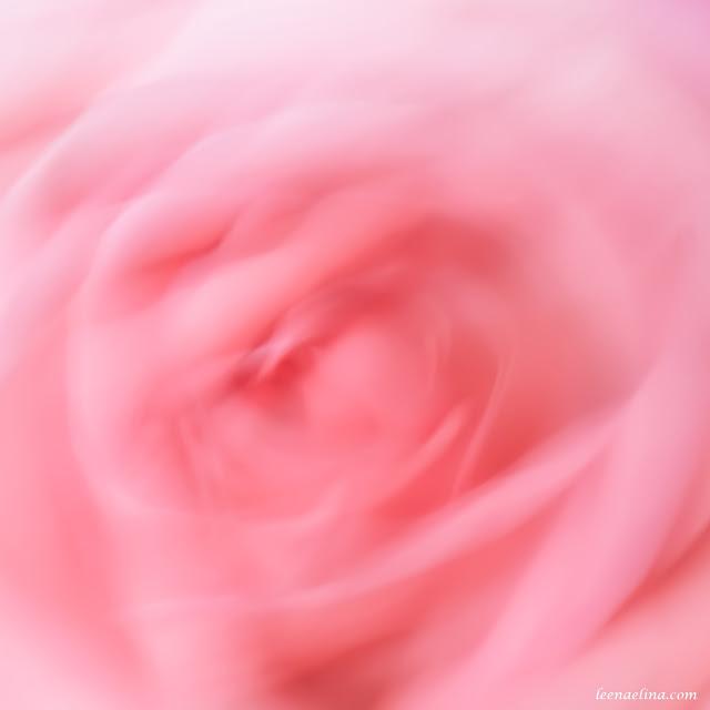 Ruususen unta