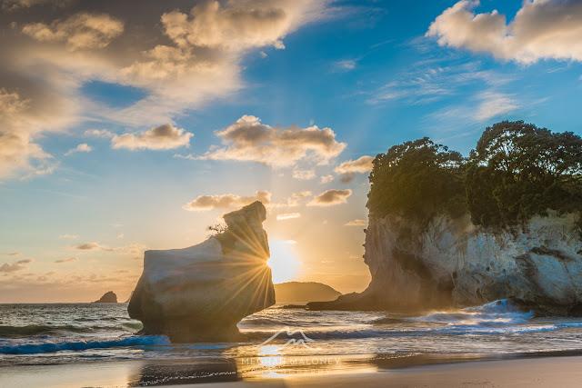 sunflare mares leg cove coromandel