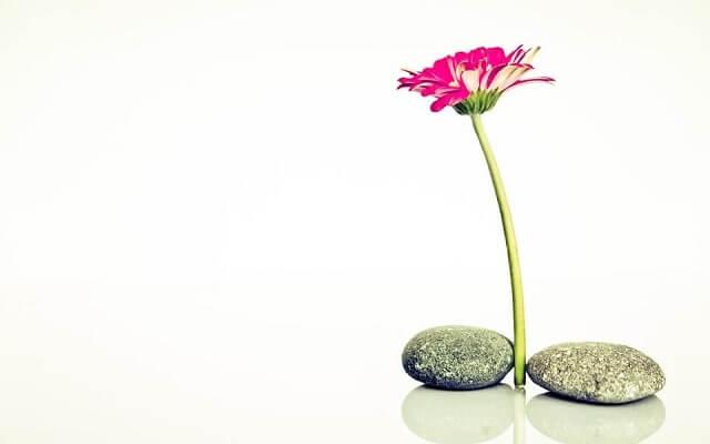 Yalnız Çiçek