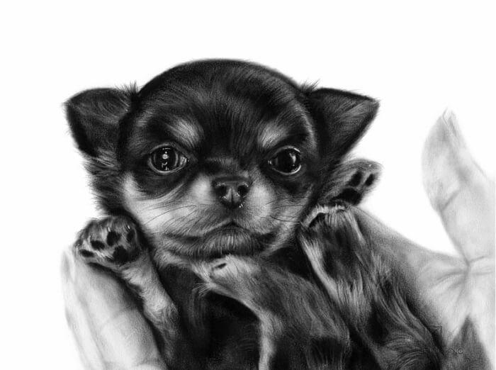 05-Puppy-Danguole-Serstinskaja-Animal-Dry-Brush-Technique-Paintings-www-designstack-co
