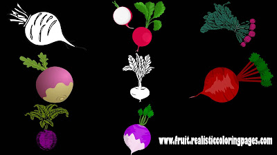 8 downloadable astonishing beetroot clipart
