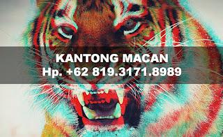 kantong-macan