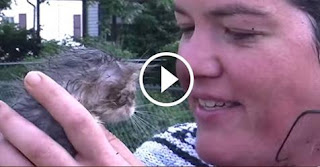 Kitten Saved From Drain Pipe in This Dramatic Rescue