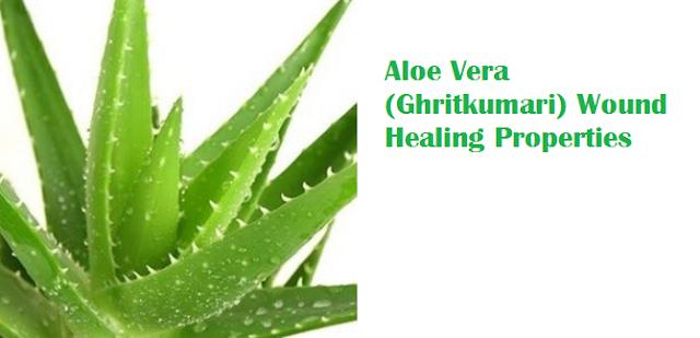 Aloe Vera (Ghritkumari) Wound Healing Properties
