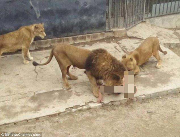 dibaham singa, laki bunuh diri