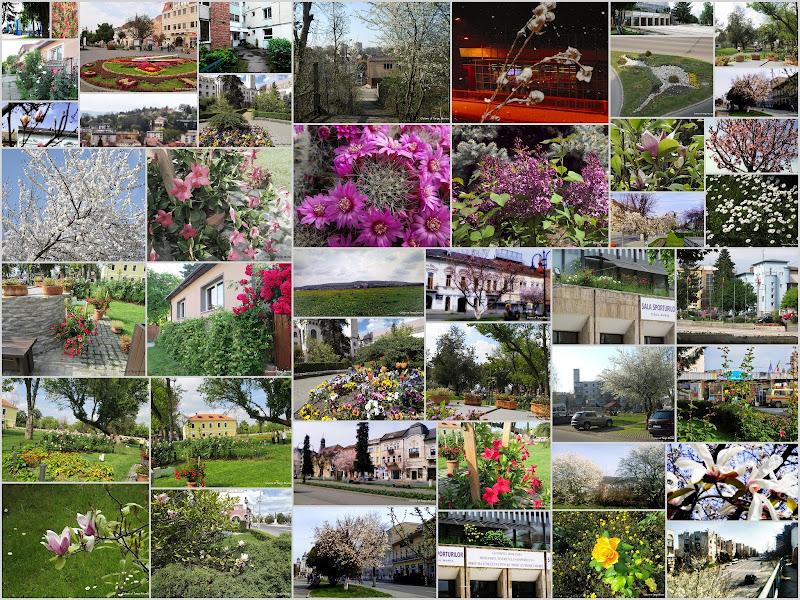 Orasul florilor