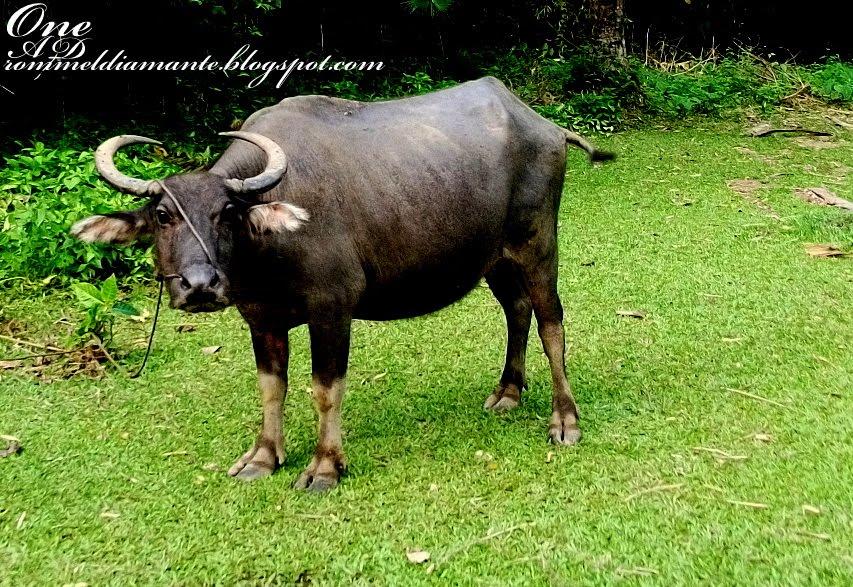 Ang pinakamagandang hayop sa balat ng lupa 1974 - 5 1