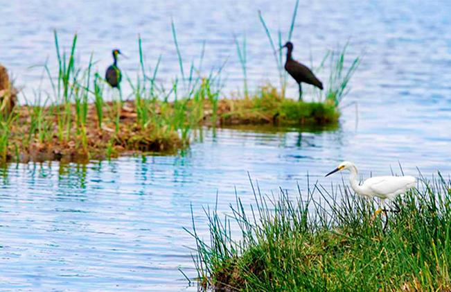 turismo pantanos de villa chorrilos lima peru