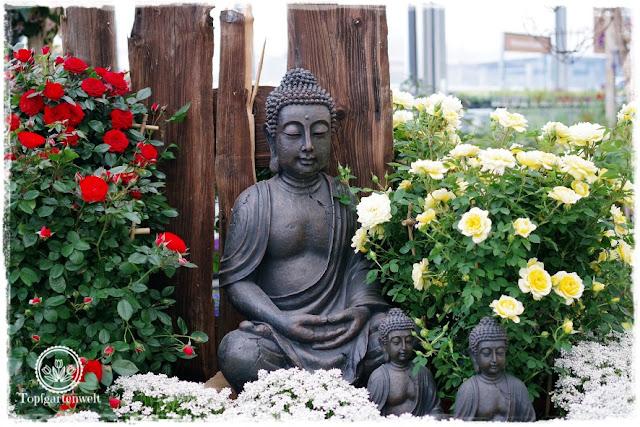 Gartenblog Topfgartenwelt Eröffnung Gartencenter Dehner Salzburg: Buddha mit Rosen