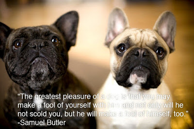 the greatest pleasure of  the best dog,