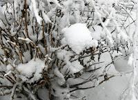 Snow in Spring