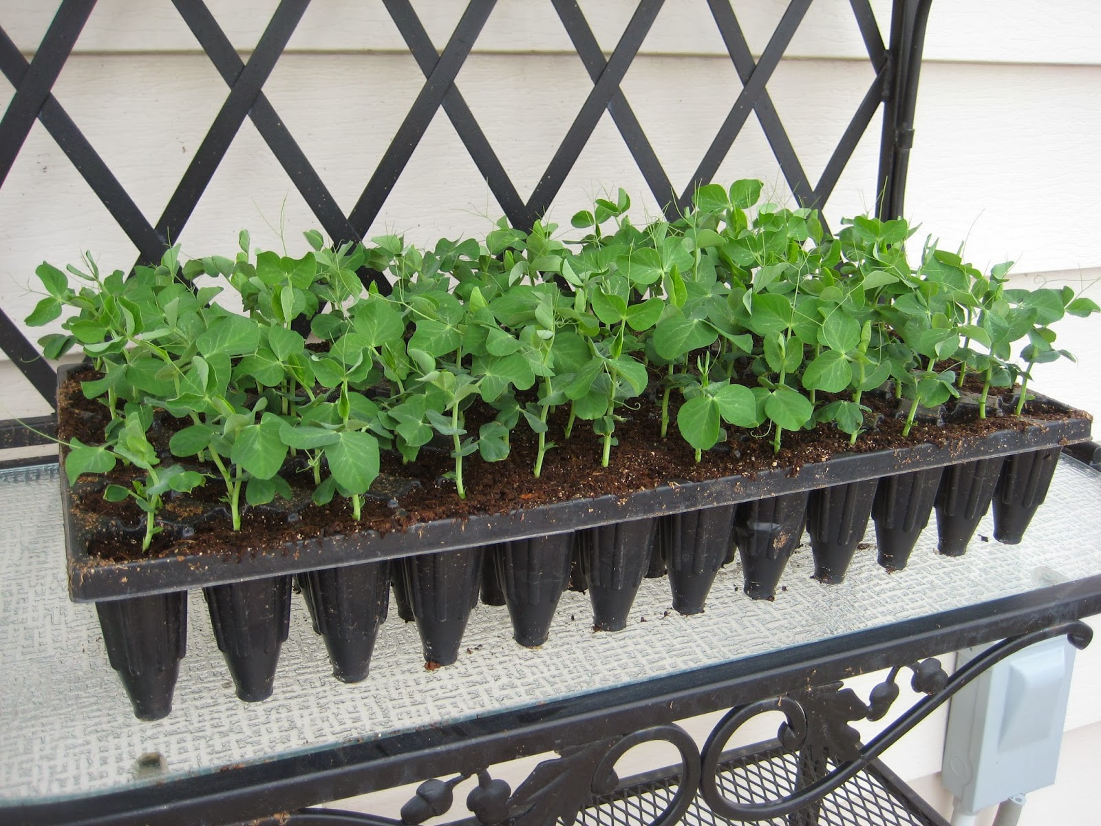 seed-starting kits, deep root insert