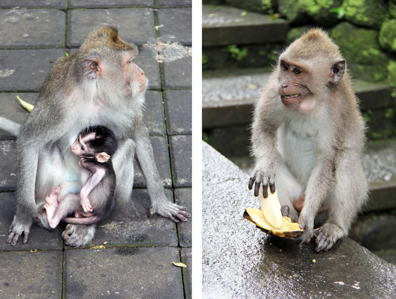 Monkey Forest, Bali | Sevengrams