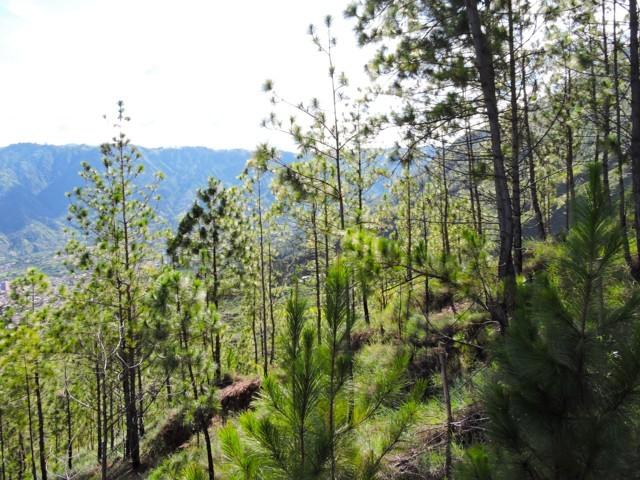los pinos del cerro quitasol