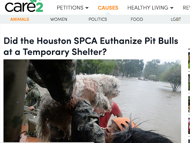 http://www.care2.com/causes/did-the-houston-spca-euthanize-pit-bulls-at-a-temporary-shelter.html