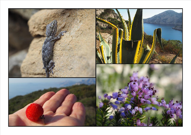 arbouse-bruyere-agave-tarente-calanques