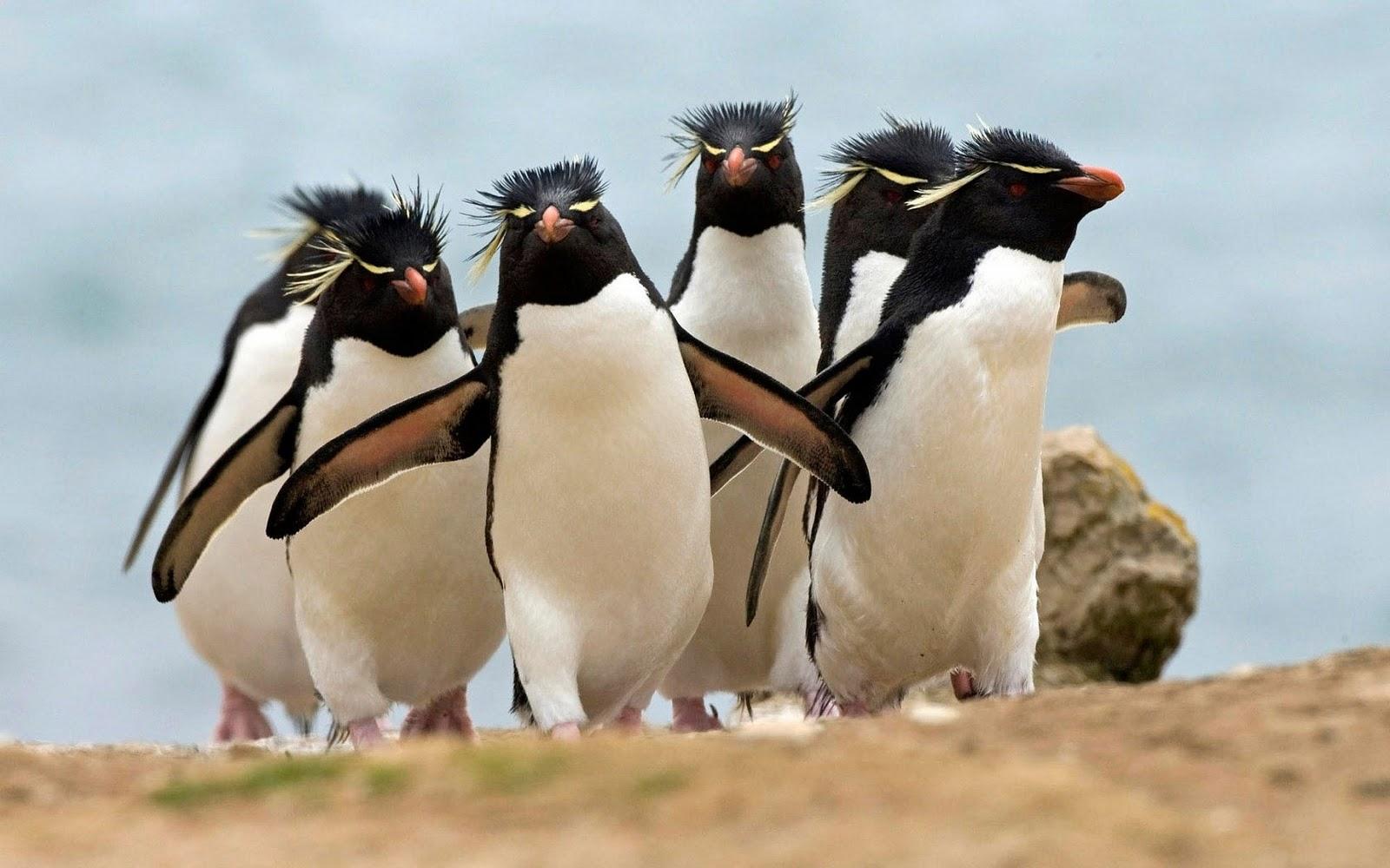 Cute Penguin Wallpaper Cartoon Pinguin Achtergronden Hd Wallpapers