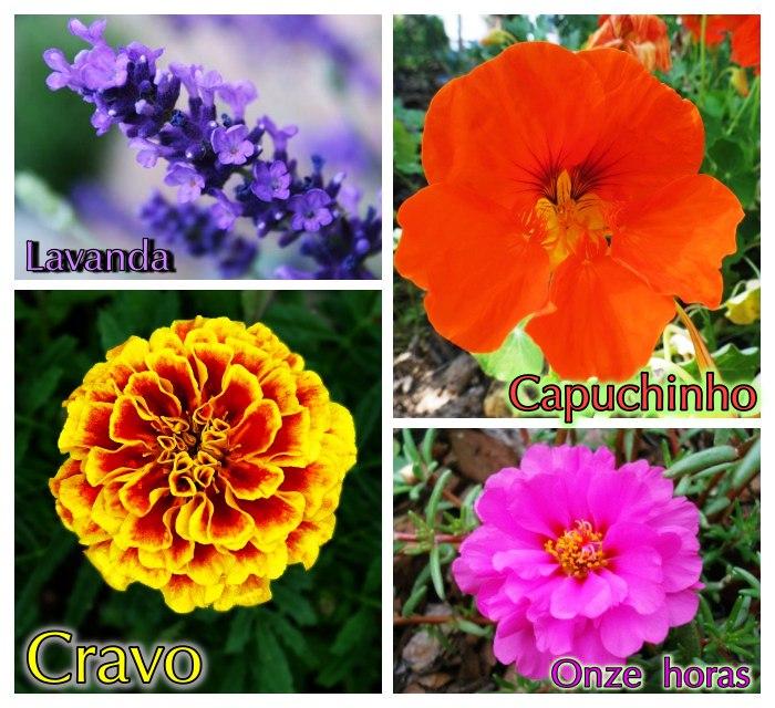 4 flores típicas da primavera para você plantar!