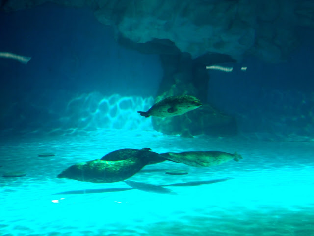 Seals in the Arctic exhibit, Ocean Park, Hong Kong