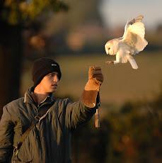 Cara memelihara burung hantu