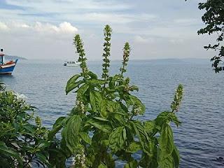 सपने में तुलसी का पौधा देखना | sapne mein tulasee ka paudha dekhna