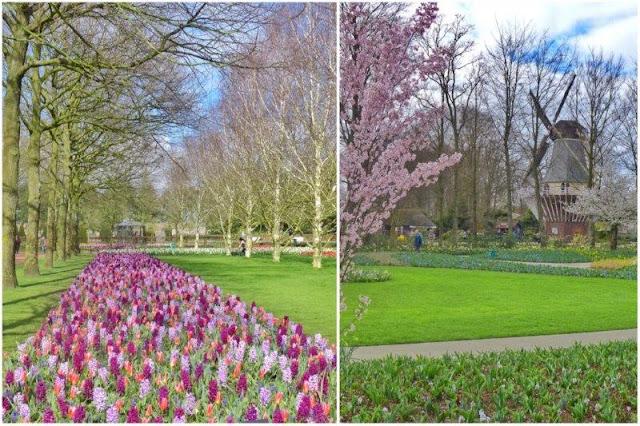 Cuadros de flores en el parque floral Keukenhof – Molino y jardines en Keukenhof