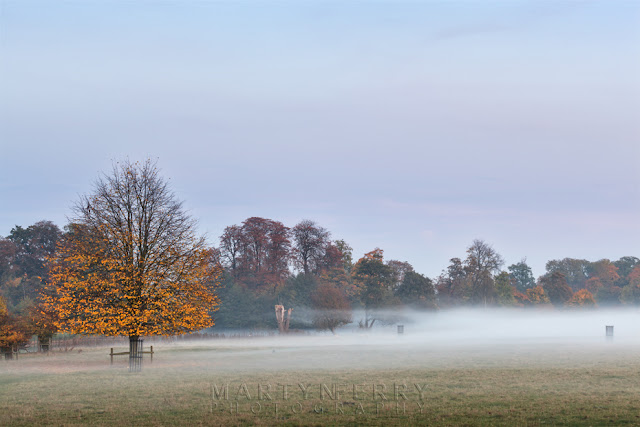 Ground mist appears at sundown between trees in autumn colour on the Wimpole Estate