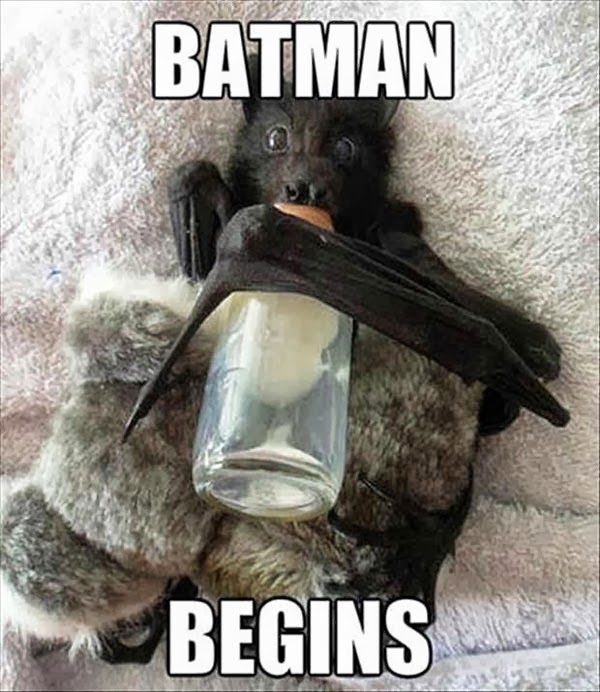 Funny animal pictures of bat with baby bottle.
