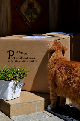 Katze Mimi riecht an einem Paket