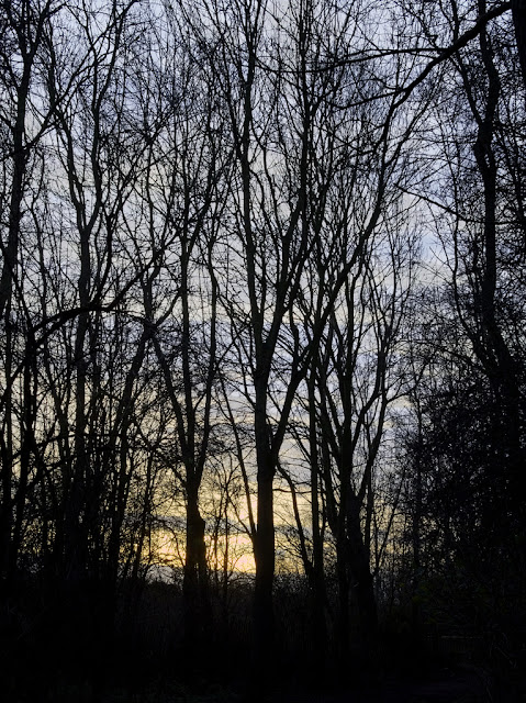Trees silhouetted against dawn sun