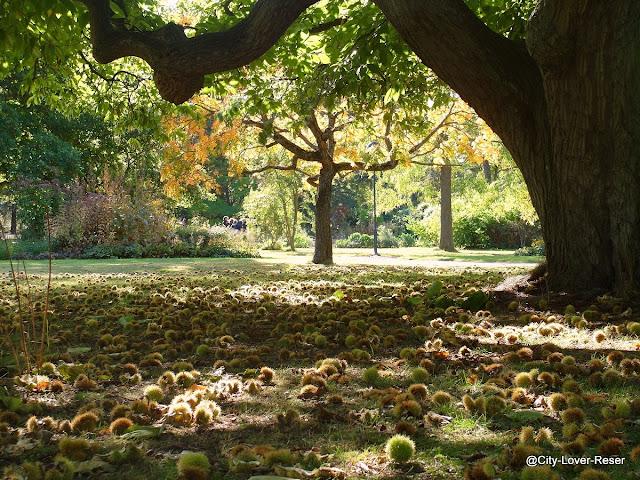 Lund, höst i Botaniska trädgården