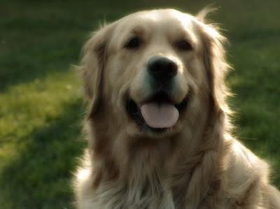 Köpek-sağlığı