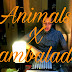 Download UniPack Animals X Sambalado