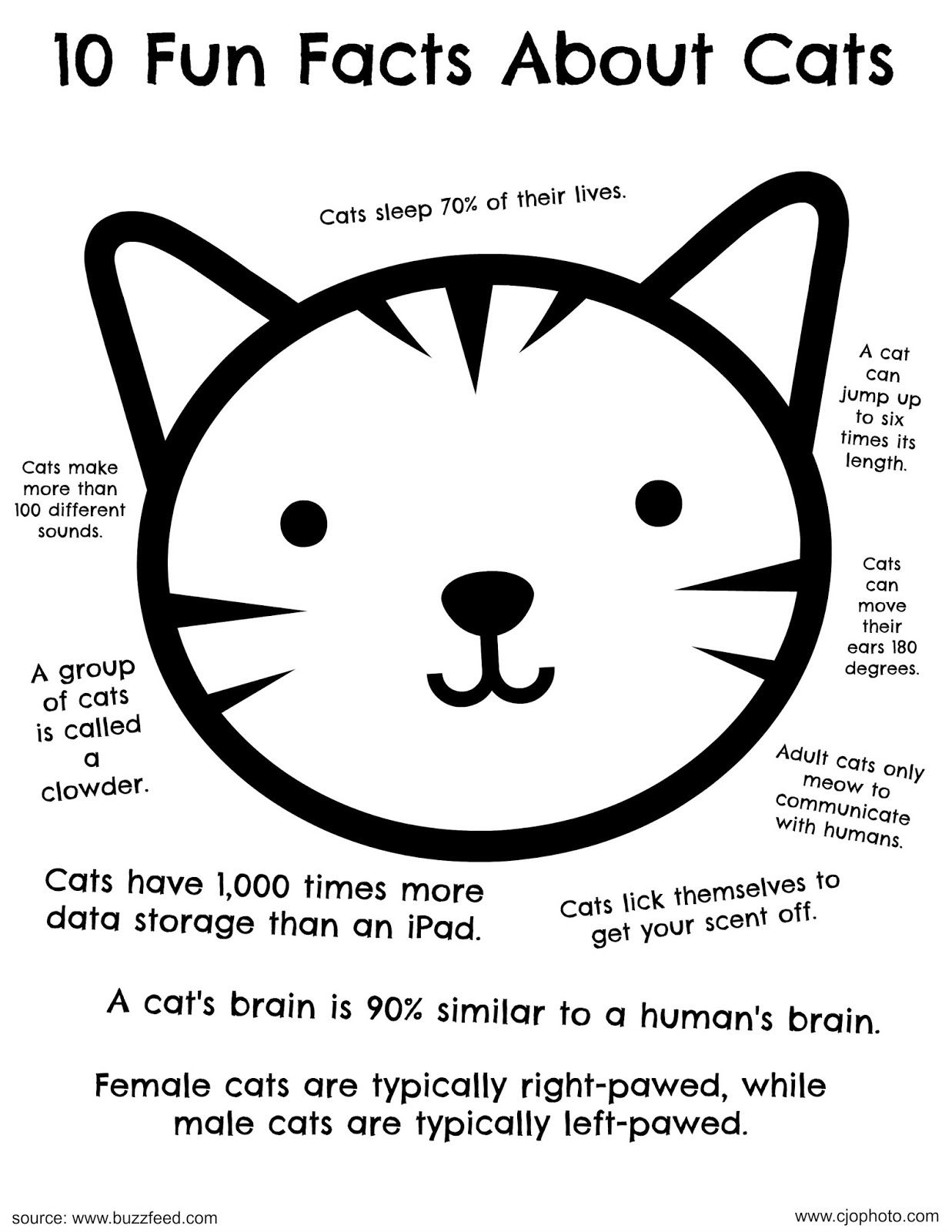 Cjo Photo Fun Facts Coloring Page Cats