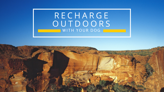 Recharge Outdoors with Your Dog