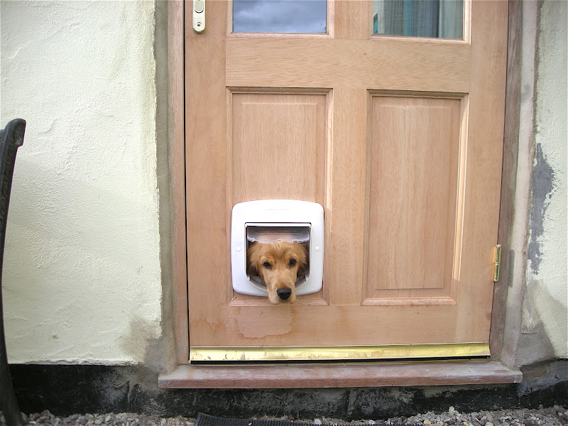 So Of Course A New Back Door Needs Cat Flap And To Be Investigated