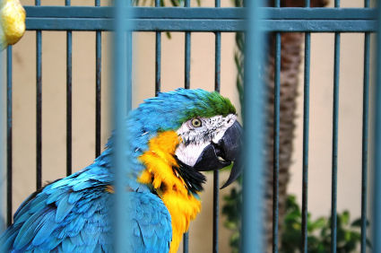 ARE YOU AN EAGLE CHRISTIAN or A PARROT CHRISTIAN? | Recipes for the
