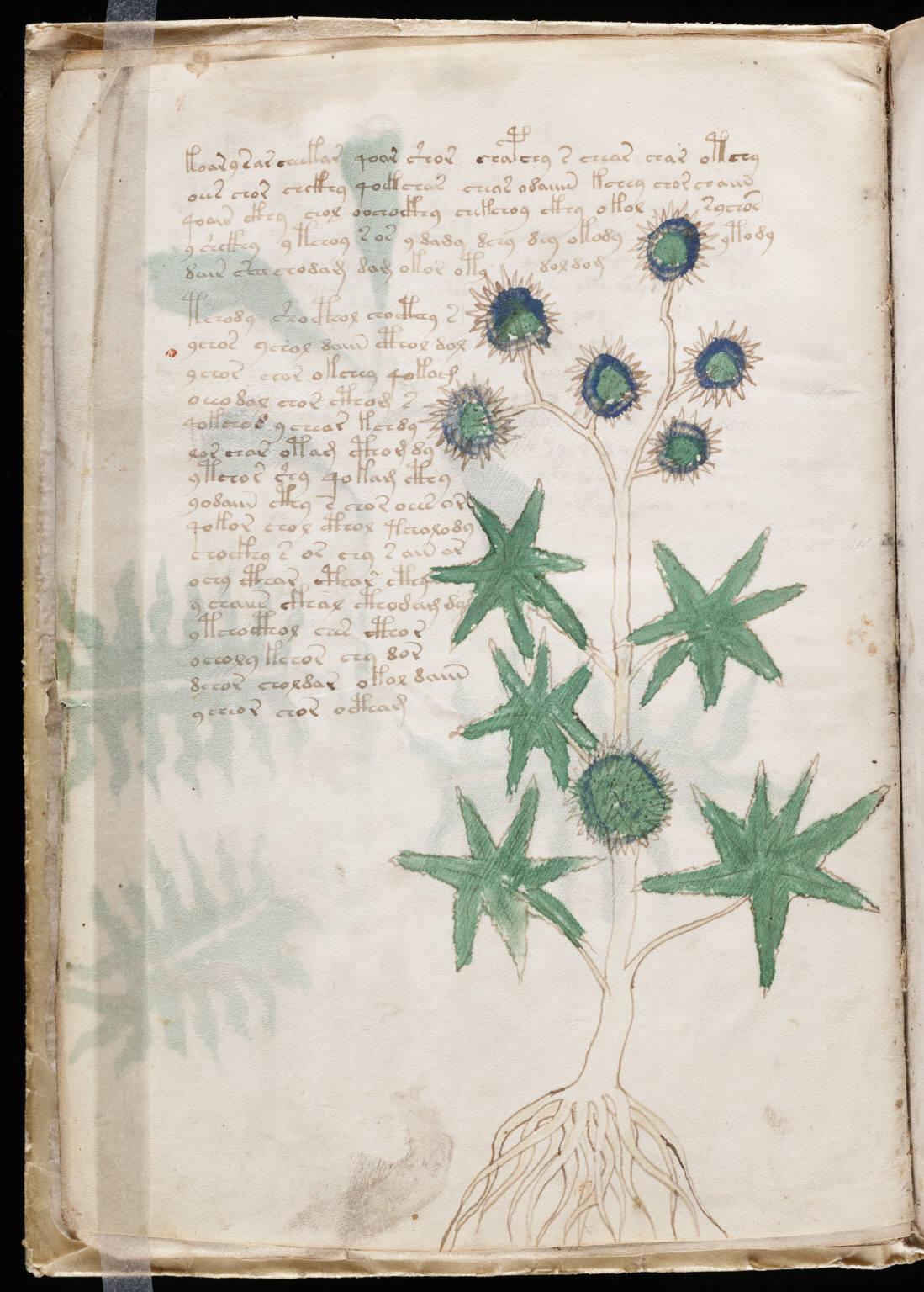 manuscrito014