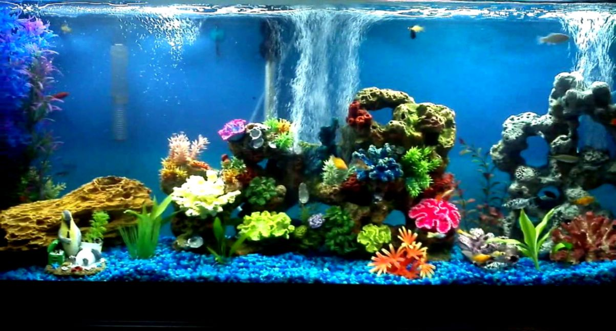 Freshwater Community Aquarium Fish Amazing Wallpapers