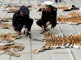Chinese tiger slaughter