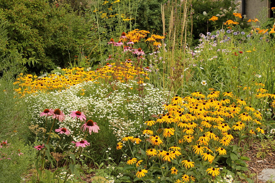 mein garten lebt august 2013. Black Bedroom Furniture Sets. Home Design Ideas