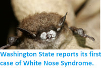 http://sciencythoughts.blogspot.co.uk/2016/04/washington-state-reports-its-first-case.html