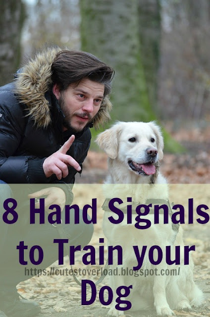 8 Hand Signals to Train your Dog