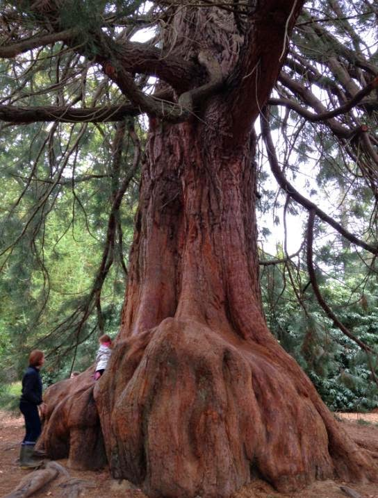 The Faraway Tree in Sheffield Park