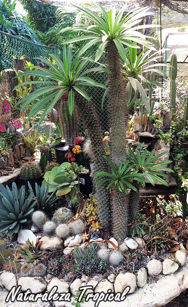 Naturaleza tropical crea tu propio desierto para decorar for Plantas para estanques pequenos